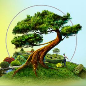 Дизайн сайта компании  «Чудо-Дерево»